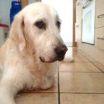 Zeus mirando desconfiado