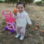 Convivencia entre naranjos